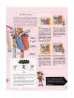 Как устроено Человеческое тело. От клетки до сердца 5