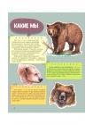 Мы - Медведи 4