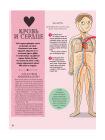 Как устроено Человеческое тело. От клетки до сердца 4
