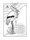Птичья Азбука в стихах 2