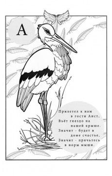 Птичья Азбука в стихах