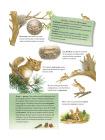 Пушистые малыши. Как растут животные и птицы 3