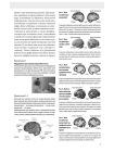 Память. Упражнения и задания по японской системе развития мозга 5
