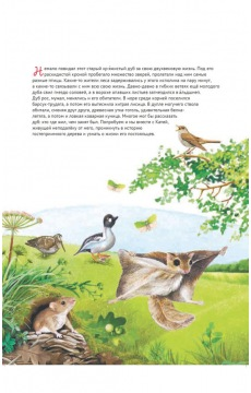 Кто где живёт? Звери и птицы леса